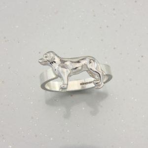 Labrador Ring SS